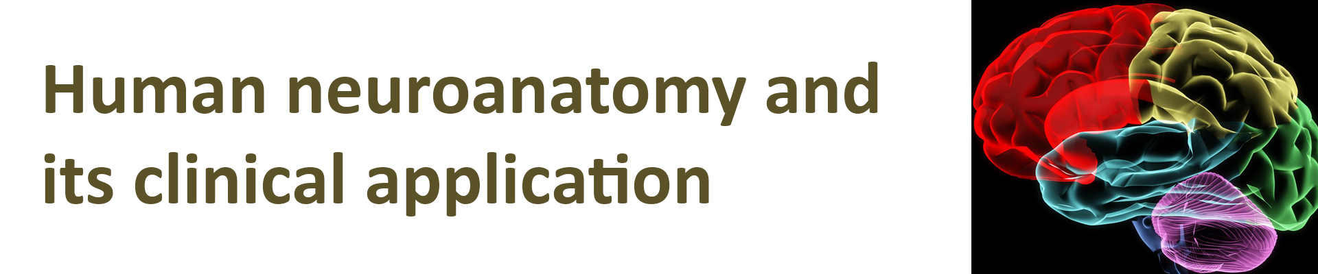 Humane Neuroanatomy Course