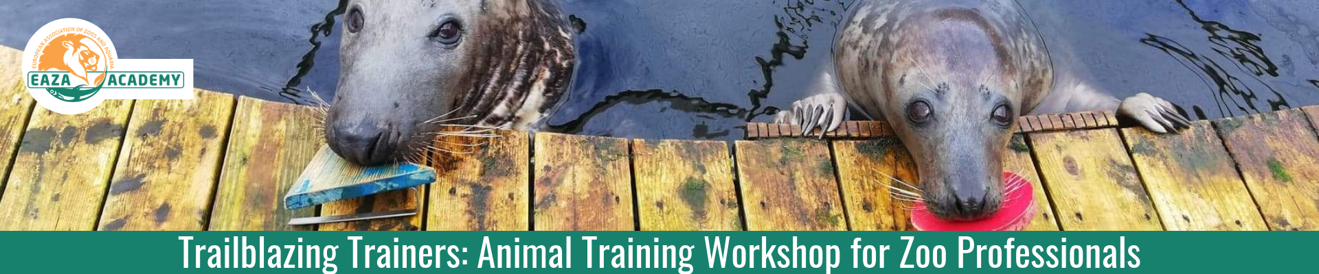 Trailblazing Trainers: Animal Training for Zoo Professionals