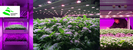 Vertical Farming, in or out?